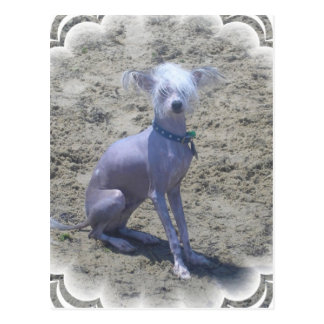 Chinesische Hundepostkarte mit Haube Postkarte
