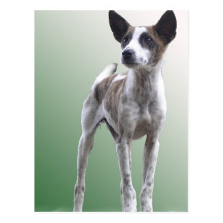 Chinesische Show-Hundepostkarte mit Haube Postkarte
