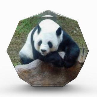 Chinesischer Panda-Bär Acryl Auszeichnung