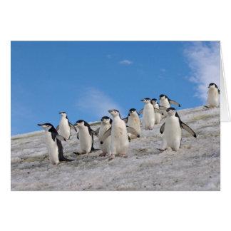 chinstrap Pinguine, Pygoscelis die Antarktis, Karte