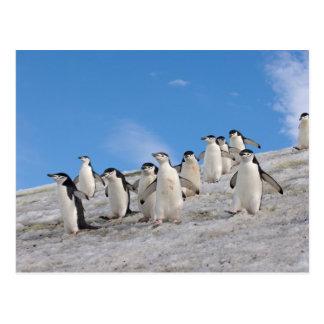 chinstrap Pinguine, Pygoscelis die Antarktis, Postkarte