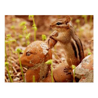 Chipmunk auf dem Ausblick Postkarte