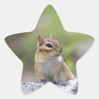 Chipmunk auf einem Felsen Stern-Aufkleber