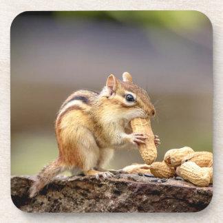 Chipmunk, der eine Erdnuss isst Untersetzer