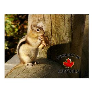 Chipmunk, der Pilze isst Postkarten