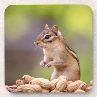Chipmunk mit Erdnüssen Untersetzer