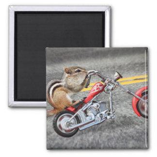 Chipmunk-Radfahrer, der ein Motorrad reitet Quadratischer Magnet