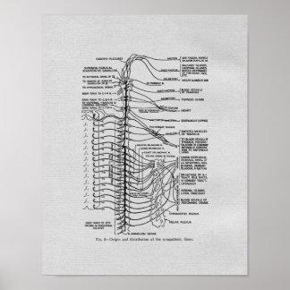 Chiropraktik-spinale Nerven-Vintager Druck Poster