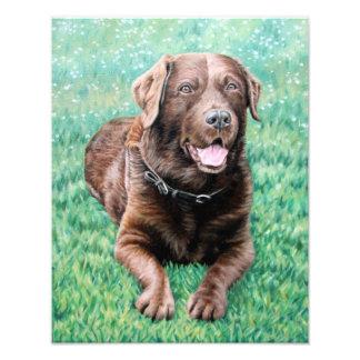 Choco Labrador Fotodruck