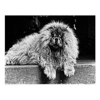 Chow-Chow-Hund auf dem Portal, Schwarzweiss Postkarte