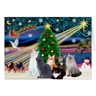 Chrstmas Magie - sechs Katzen (Vielzahl) Karte