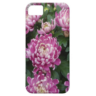 Chrysantheme-Blumenstrauß Schutzhülle Fürs iPhone 5