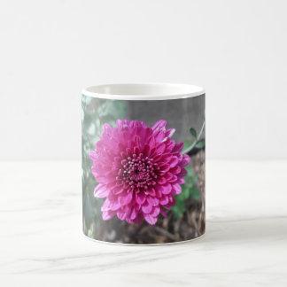 Chrysantheme-dunkelrote Blume Verwandlungstasse