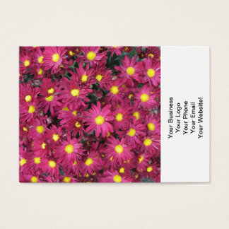 Chrysantheme-Gruppen-Garten lila Visitenkarte