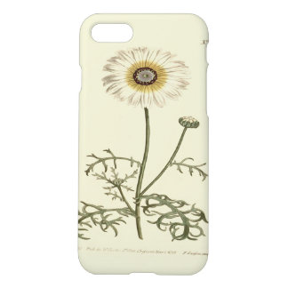Chrysantheme-Tricolor gelbe Illustration iPhone 8/7 Hülle