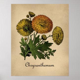 Chrysantheme-Vintages botanisches Poster