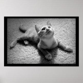 Chugar in Kittenhood Plakatdruck