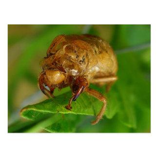 cicada1 postkarte