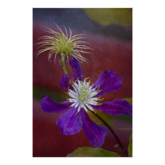 Clematis2 Poster