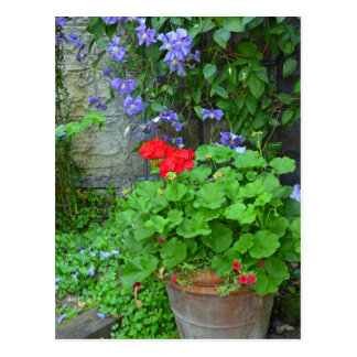 Clematis- und Pelargonie-Blumengarten Postkarte