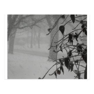 Clematis- und Schneefall während eines Blizzards Postkarte