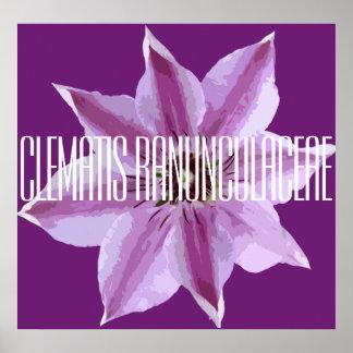 ClematisRanunculaceae - Plakat (Matt)