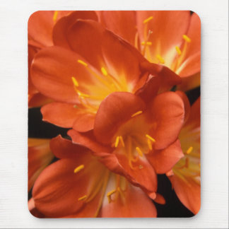 Clivia Blumen-Gruppe Mousepad