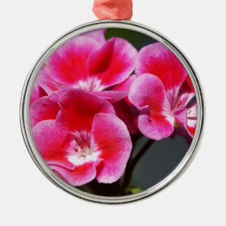 Close up of a stunning pink geranium silbernes ornament