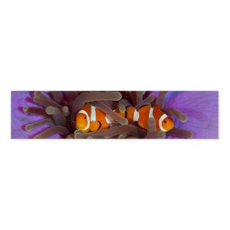 Clown Anemonefish Servietten-Bänder (Set von 12) Serviettenband