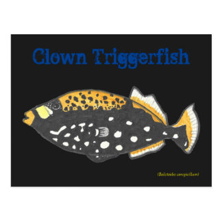 Clown Triggerfish Postkarte