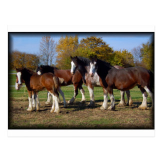 clydesdale Gruppe Postkarte