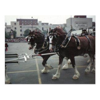 Clydesdale Pferde an der Stadtmitte-Piazza in Postkarte