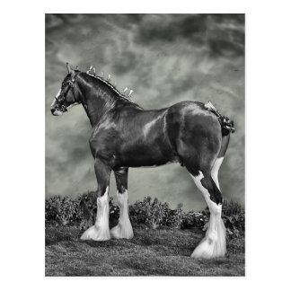 Clydesdale Stallion B&W Postkarte
