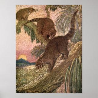Coatimundi durch Louis Sargent, Vintage wilde Poster