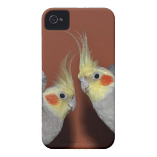 Cockatiel-Duo iPhone 4 Fall iPhone 4 Cover