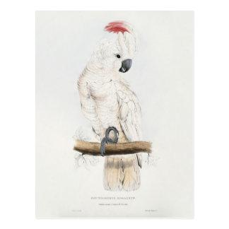 Cockatoo Lachs-mit Haube Postkarte