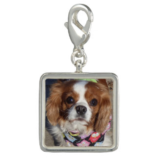 Cocker spaniel-Charme Foto Charms