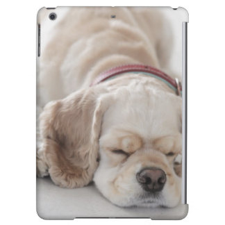 Cocker spaniel-Hundeschlafen