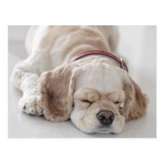 Cocker spaniel-Hundeschlafen Postkarte