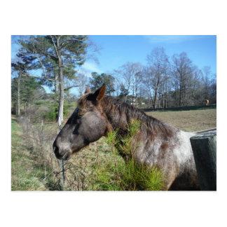 Cocos und cremefarbenes Pferd Postkarte