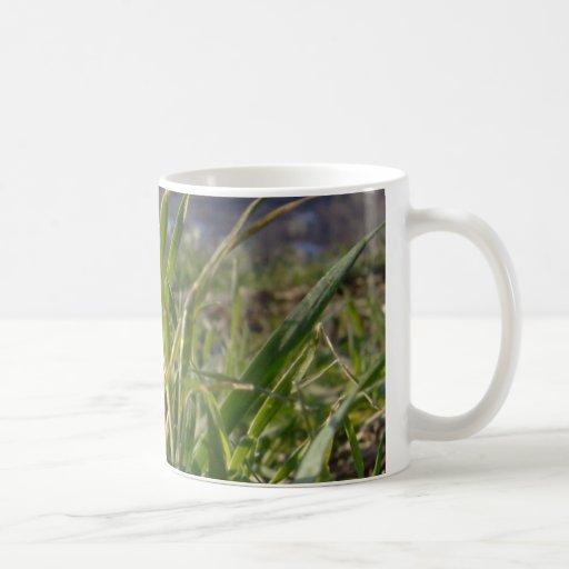 Coffe weißes Tassen-Gras