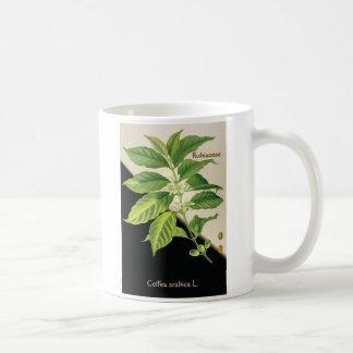 Coffeaarabica L. Kaffeetasse