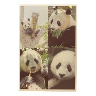 Collage mit vier Pandabildern Holzdruck