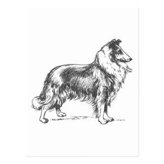 Collie-Hund Postkarten