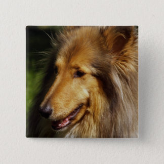 Collie-Hundephotographie Quadratischer Button 5,1 Cm