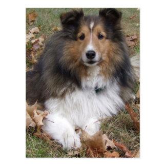 Collie-Hundepostkarte Postkarte