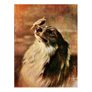 Collie und Piepmatz Postkarte