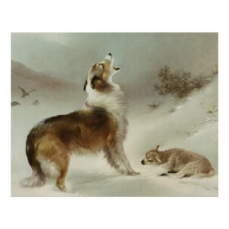 Collie und Schaf Poster