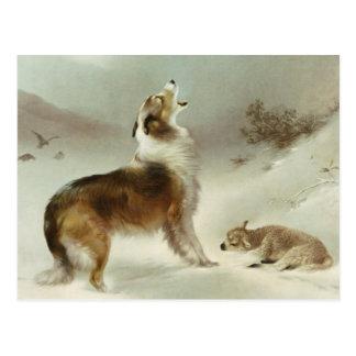 Collie und Schaf Postkarte