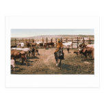 Colorado-Cowboy 1904 Postkarte